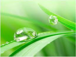 A leaf of grass